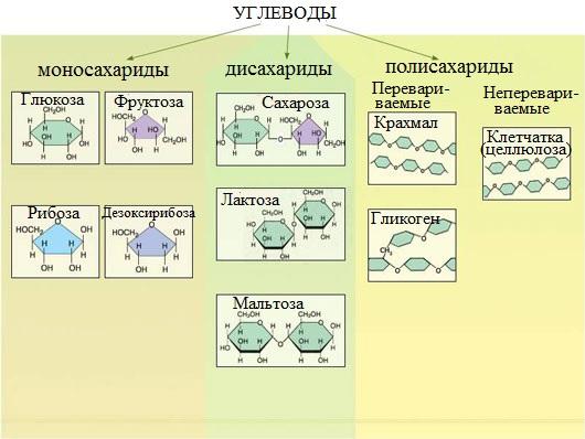 Химия углеводы это