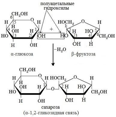 Из каких моносахаридов состоит мальтоза