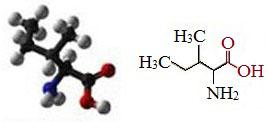 Аминокислота изолейцин, полезные свойства, избыток и недостаток, изолейцин в продуктах